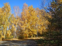 Ill-lloking trees